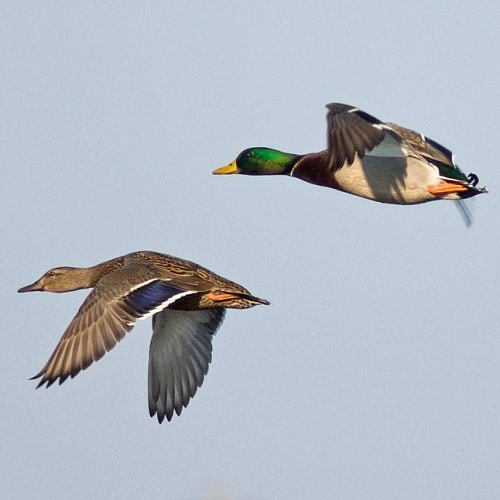 To Waddle or To Soar?